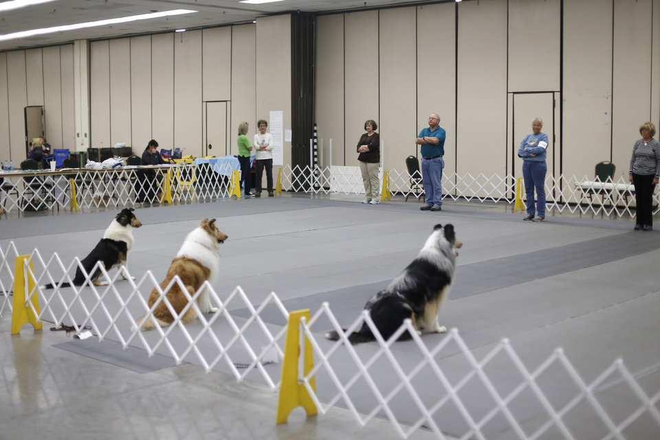 Photo - Obedience trial competition at the Collie Club of America dog show at the Cox Convention Center in  Oklahoma City, walk their dogs in the Myriad Botanical Gardens, Wednesday, March 11, 2015. Photo by Doug Hoke, The Oklahoman