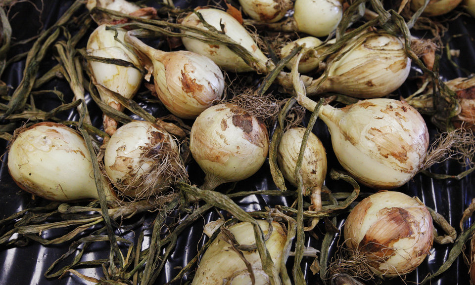 Photo - Newly harvested onions are laid out to dry Friday. The onions were grown near the Oklahoma County sheriff's substation in Midwest City as a part of an inmate gardens program. PHOTO BY PAUL B. SOUTHERLAND, THE OKLAHOMAN  PAUL B. SOUTHERLAND - PAUL B. SOUTHERLAND