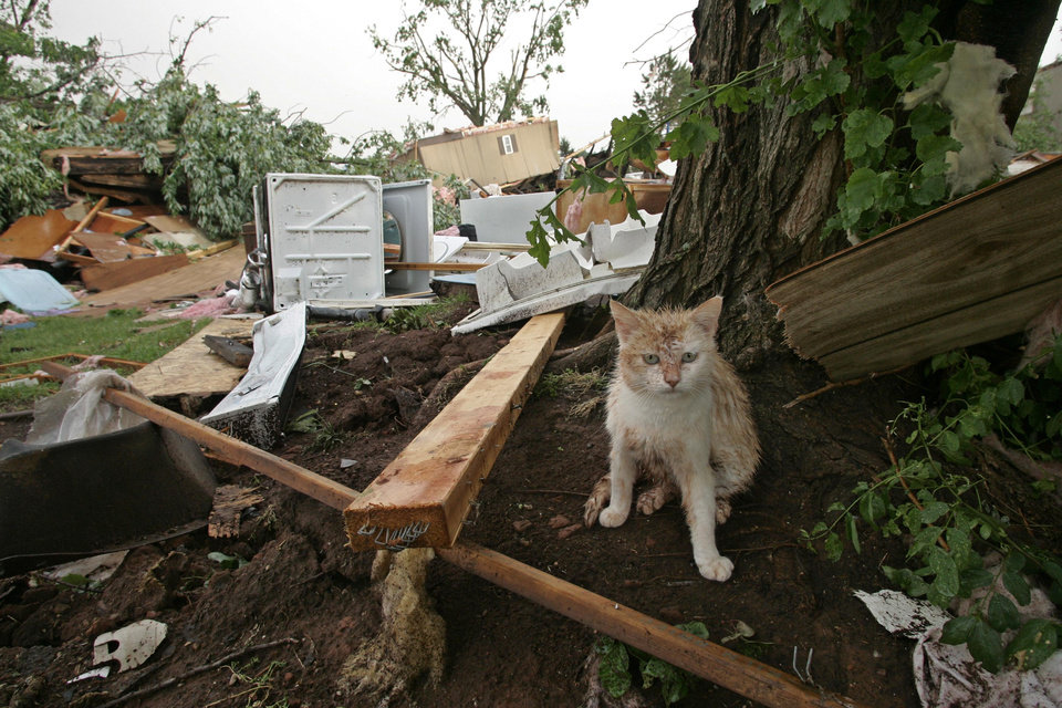 Photo - STORM / TORNADO DAMAGE: A muddy kitten takes cover next to a tree after a tornado came through the mobile home community of Prairie Creek Village in Slaughterville, Okla., flattening several homes, Monday, May 10, 2010. (AP Photo/Sue Ogrocki) ORG XMIT: OKSO122