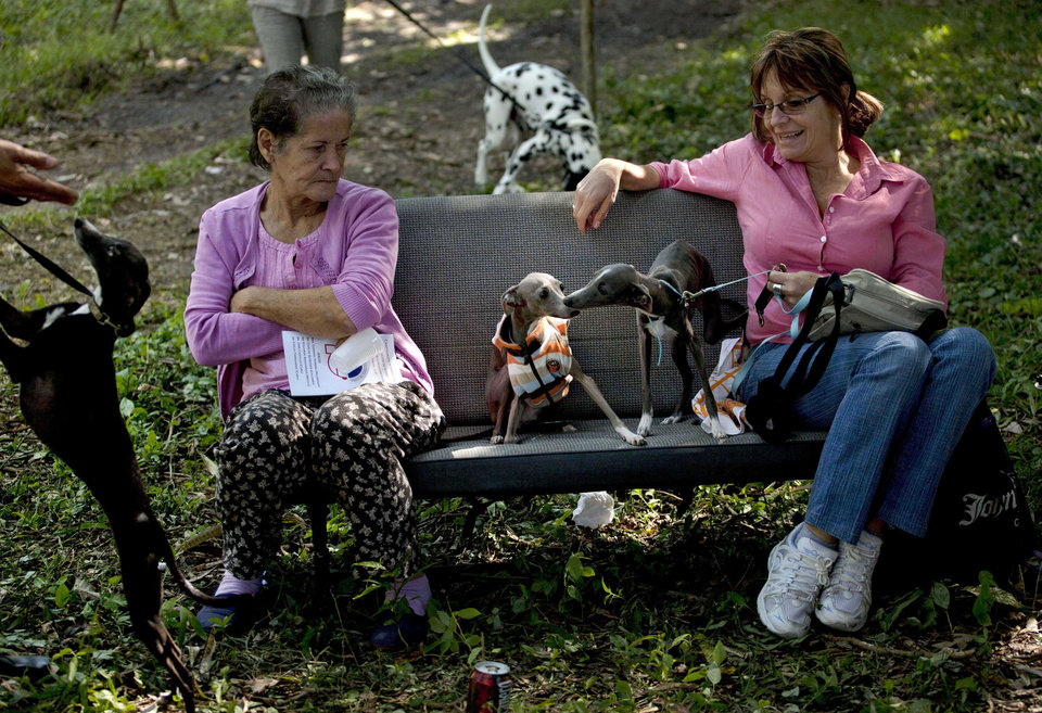 In this Nov. 22, 2012 photo, people sit on a car seat with their galgos dogs during the Fall Canine Expo in Havana, Cuba. Hundreds of people from all over Cuba and several other countries came for the four-day competition to show off their shih tzus, beagles, schnauzers and cocker spaniels that are the annual Fall Canine ExpoÌs star attractions. (AP Photo/Ramon Espinosa)
