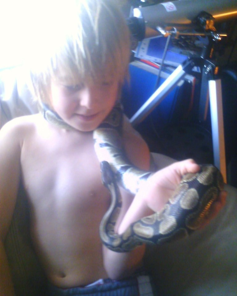 Kash loves this snake. .he wanted a snake for along time .. then my friend at work said his snake was sick and wouldn't eat.. well me of motherrrrr of all pets humm I will take it.. so here it is now...<br/><b>Community Photo By:</b> Tama<br/><b>Submitted By:</b> Tama, Midwest