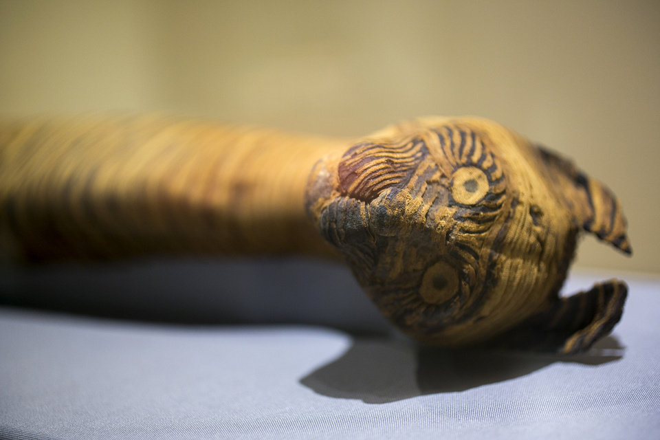 Photo - In this March 20, 2014 photo, a cat mummy, is displayed as part of the exhibit