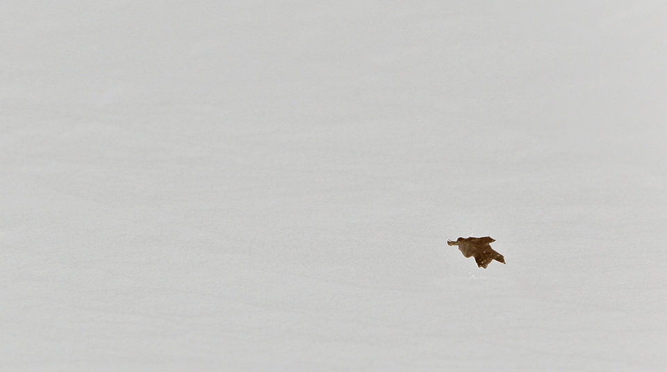Photo - A single tree leaf blows in the air across the snow on Tuesday, Feb. 1, 2011, in Yukon, Okla.   Photo by Chris Landsberger, The Oklahoman