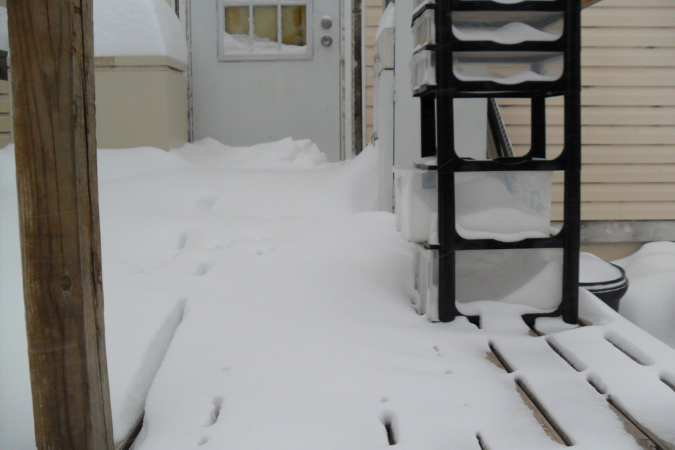 Photo - Couldn't get out the back door this morning