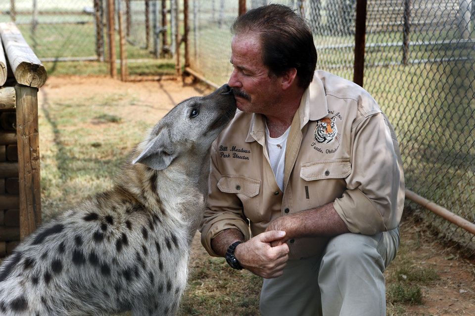 An affectionate hyena says hello to owner Bill Meadows at Tiger Safari. STEVE SISNEY - PHOTO BY STEVE SISNEY, THE OKLAH