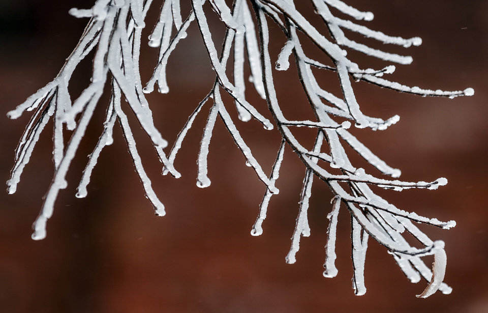 Photo - Ice forms on branches as a winter blast hits the state on Wednesday, Feb. 10, 2021. [Chris Landsberger/The Oklahoman]