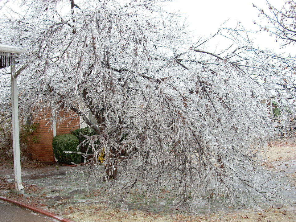 "Neighbor's Redbud coated with 1/2"" of ice<br/><b>Community Photo By:</b> Leonard Sparks<br/><b>Submitted By:</b> Leonard, Midwest City"