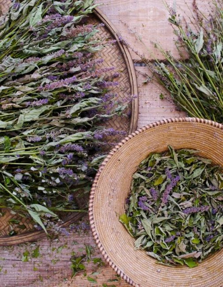 Photo -  Author and photographer Matthew Benson cultivates organic vegetables, historic fruit, raw honey and medicinal flowers and herbs at his Stonegate Farm in New York's Hudson River Valley. Benson will speak during the Myriad Botanical Garden's annual Oklahoma Garden School. [Photo provided]