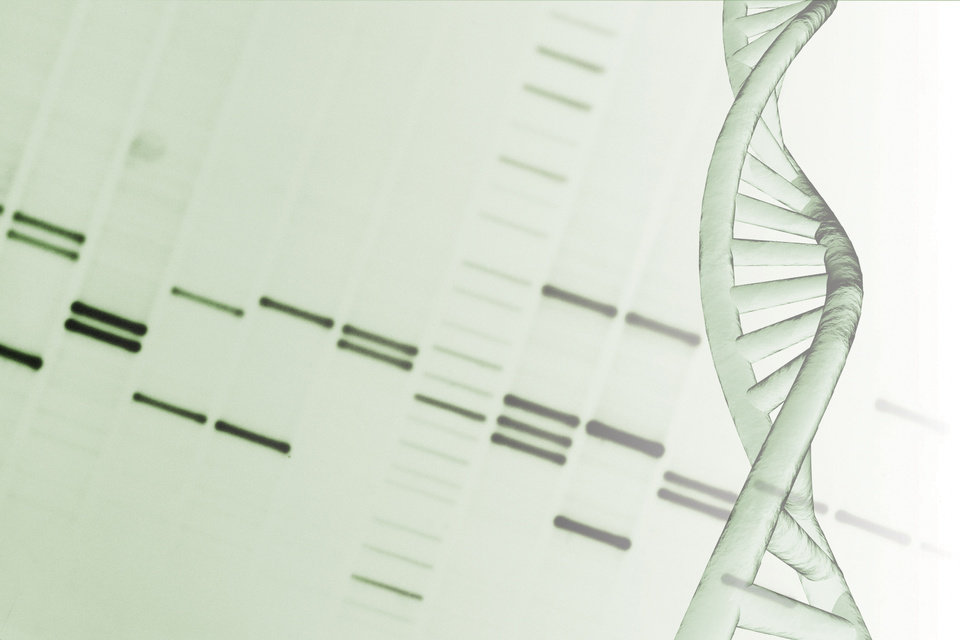 Photo - Scientists can now determine your entire genetic make-up in less than one day and for a price of $1,000.  Comstock