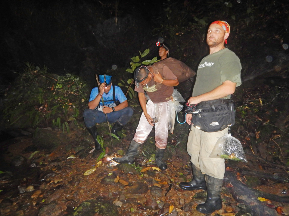 Photo -  Cameron Siler, right, works with Filipino collaborators surveying a rainforest stream at night. The researchers are listening for a strange frog call they didn't recognize to see if they could pinpoint its location in the forest. With Siler are, from left, Marvic Yngente, Marlon Baldoza and Christian Zafa. PHOTO PROVIDED   PROVIDED -  Provided by Cameron Siler