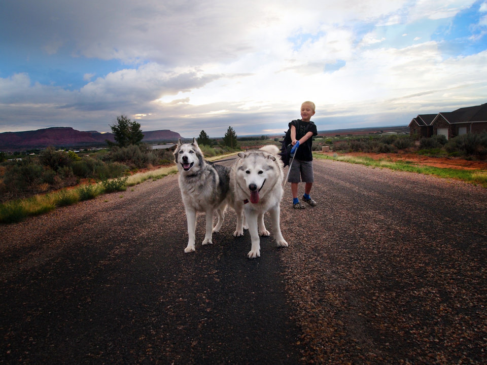 Photo - This Aug. 19, 2014 photo provided by Jill Williams shows kindergartner Harry Williams, 7, with his dogs Flora and Gandalf on his way to the bus stop on first day of school in Kanab, Utah. For millions of dogs across the country, summer is gone and so are their best buddies. Most dogs object for a while but eventually adjust to the new hours.  But millions of others will feel abandoned, panicky, sad and unable to cope as they look for ways to lash out. (AP Photo/Jill Williams)