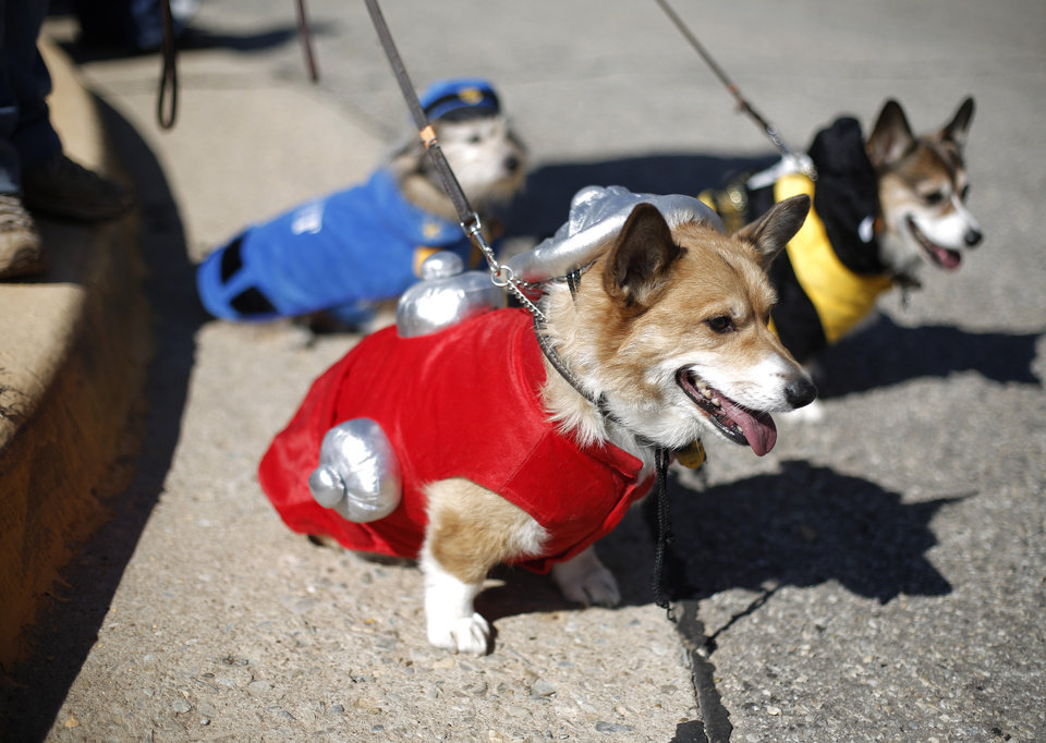 Skidboot, a fire hydrant, Kissy, a bumblebee, and Pete, a police officers, sit and watch during a dog and child costume show at the Yukon Community Center in Yukon, Okla., Saturday, Oct. 27, 2012.  Photo by Garett Fisbeck, The Oklahoman