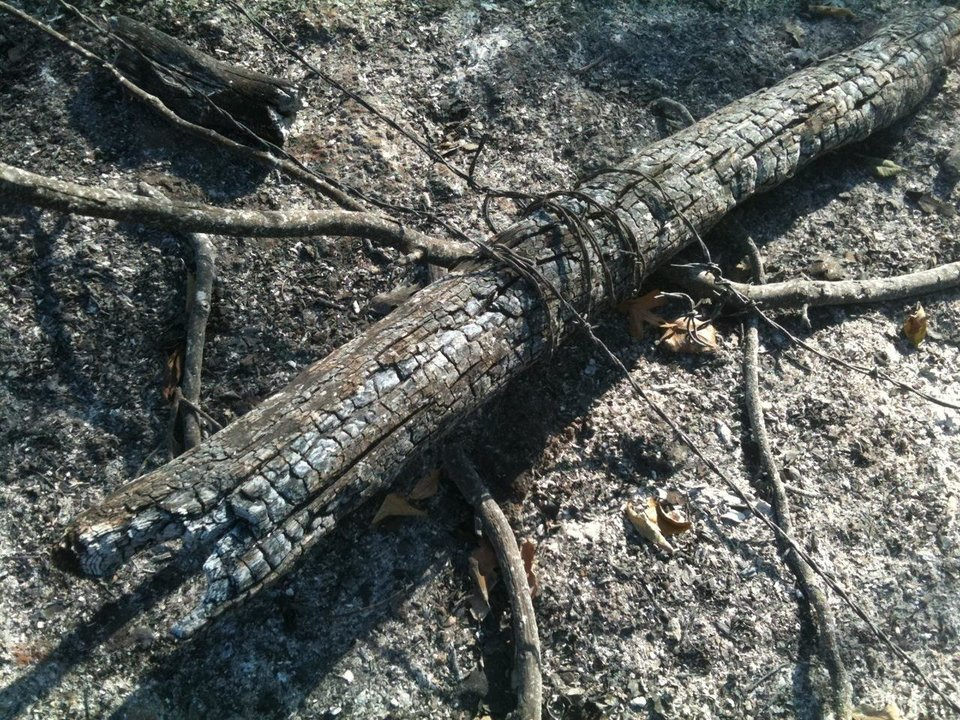 Photo - Charred fence post with barbed wire still attached. Photo by Jim Beckel, The Oklahoman.