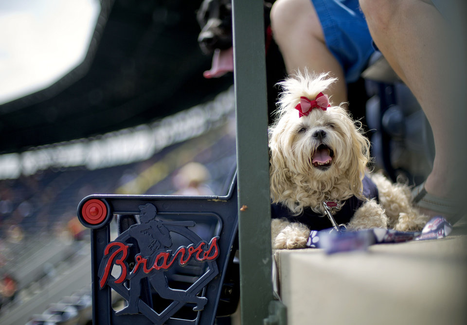 Photo - Punky sits by the feet of her owner Jennifer Pardue, of Atlanta, while attending the Bark in the Park event where fans bring their dogs to a baseball game between the Cincinnati Reds and Atlanta Braves, Sunday, April 27, 2014, in Atlanta. (AP Photo/David Goldman)