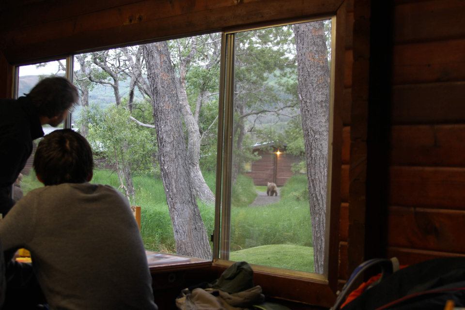 Photo - People watch a bear from the window as they eat lunch at Brooks Lodge at Katmai National Park and Preserve, Alaska on July 4, 2013. At the height of the salmon season, near the end of July, there will be up to 70 brown bears plus cubs with a one-square mile area of Brooks Camp, along with humans. (AP Photo/Mark Thiessen)