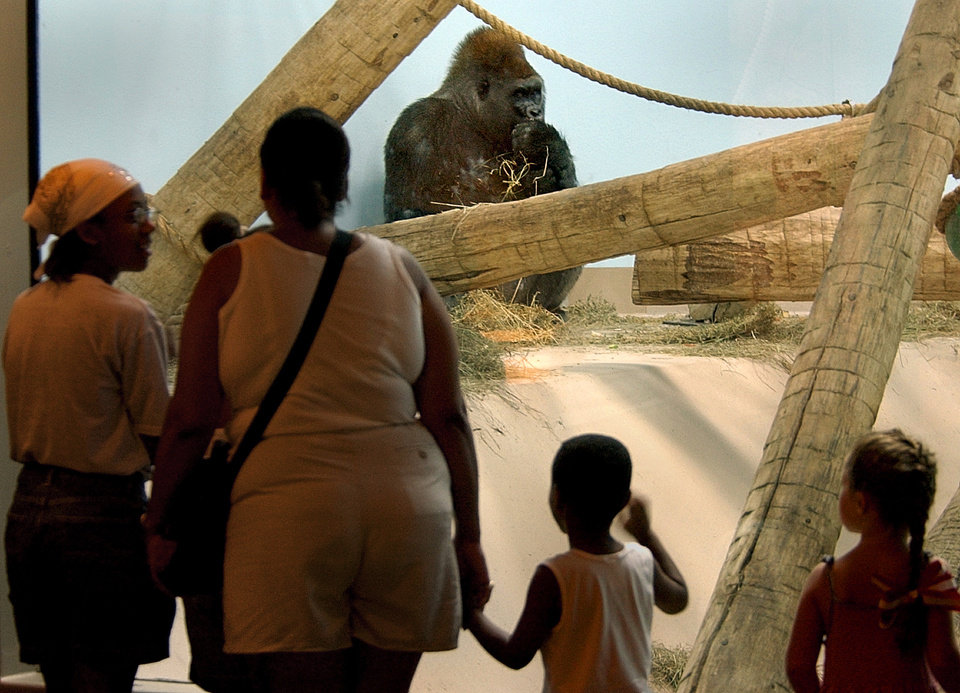 Photo - A group of visitors watch a gorilla in the Great EscApe area of the Oklahoma City Zoo during free admission day.  Staff photo by Bryan Terry