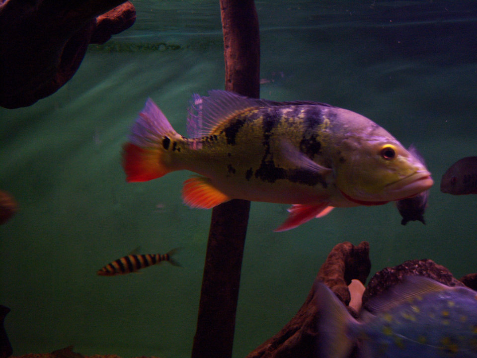 Fish from the zoo<br/><b>Community Photo By:</b> Reese Malkawi<br/><b>Submitted By:</b> idris, WAR ACRES