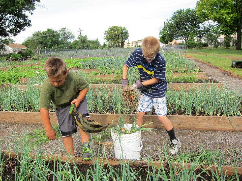 Photo -  Carter Daniels, 8, and Lane Parish, 11, pull onions in the community garden at Del City Church of Christ, 1901 Vickie Drive. Photo by Carla Hinton, The Oklahoman