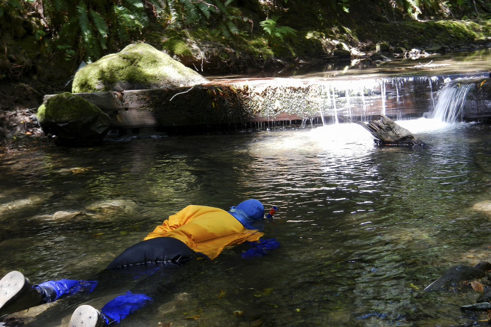 Photo - This May 2013 photo released by the California Department of Fish and Wildlife (DFW) shows a DFW diver conducting an underwater survey to count young salmon and steelhead fish in a tributary to the South Fork Eel River in Humboldt County, Calif. Some drought-stricken rivers and streams in Northern California's coastal forests are being polluted and sucked dry by water-guzzling medical marijuana farms, wildlife officials say _ an issue that has spurred at least one county to try to outlaw personal grows. (AP Photo/California Department of Fish and Wildlife)