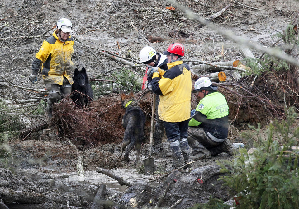 Photo - Two search and rescue dogs meet as they investigate a section of tree roots at the west side of the mudslide on Highway 530 near mile marker 37 on Sunday, March 30, 2014, in Arlington, Wash. Periods of rain and wind have hampered efforts the past two days, with some rain showers continuing today. (AP Photo/Rick Wilking, Pool)