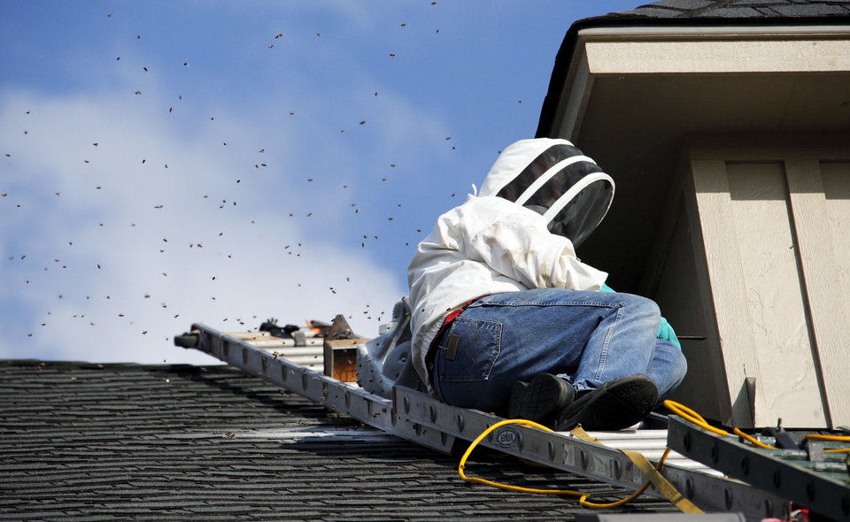Photo - Harry McQuown, of Bee Removal Inc., works to cut a hole in the second story roof at the Tawwater Law Firm, 14001 Quail Springs Parkway, in Oklahoma City, to remove a hive of bees in the top of the building, Wednesday, June 20, 2012. Photo by Nate Billings, The Oklahoman