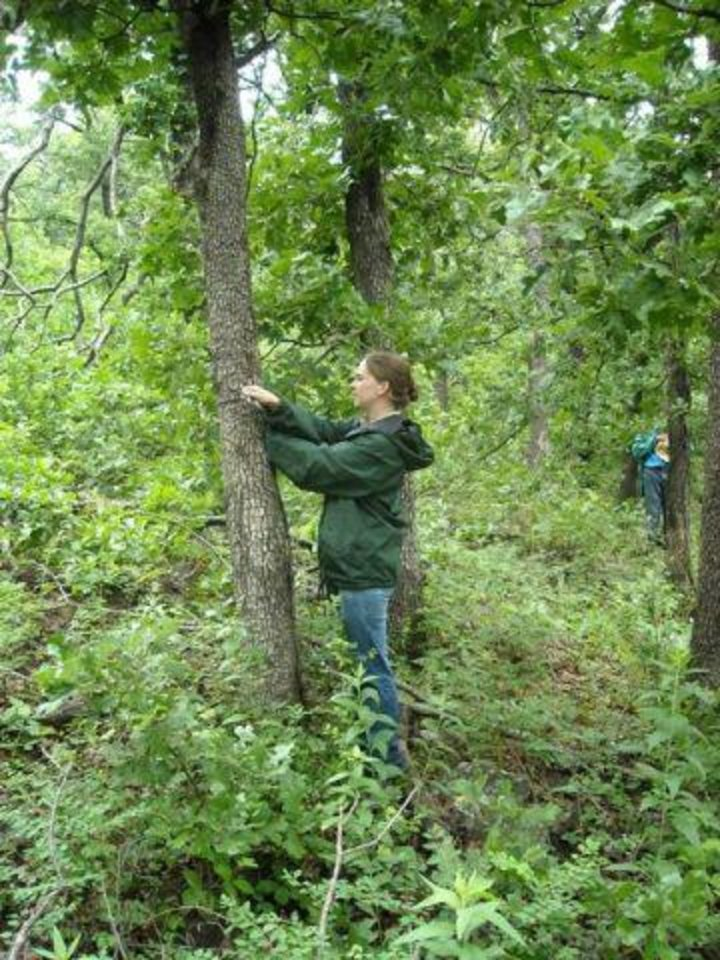 Photo - Erin Johnson, a forester for the Oklahoma Forestry Services, takes a tree measurement. Photo provided