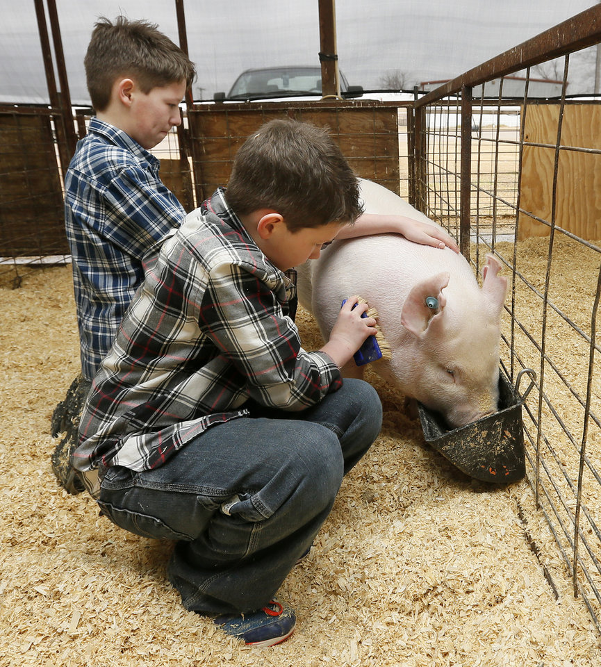 Photo -      Brothers Jacob Howell, back, and Keegan Howell brush Keegan's pig, Ocho, in Yukon, Okla., Wednesday, March 26, 2014. The 12-year-old brothers, who are two of three autistic triplets, participate in the Agvocates for Exeptional Individuals program. Agvocates for Exceptional Individuals helps children with special needs by teaching them to care for and exhibit livestock. Photo by Nate Billings, The Oklahoman   NATE BILLINGS