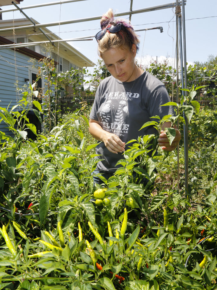 Photo -  Jennifer McCoy picks peppers in the backyard garden of Sara and David Braden. Photo by Paul Hellstern, The Oklahoman   PAUL HELLSTERN -