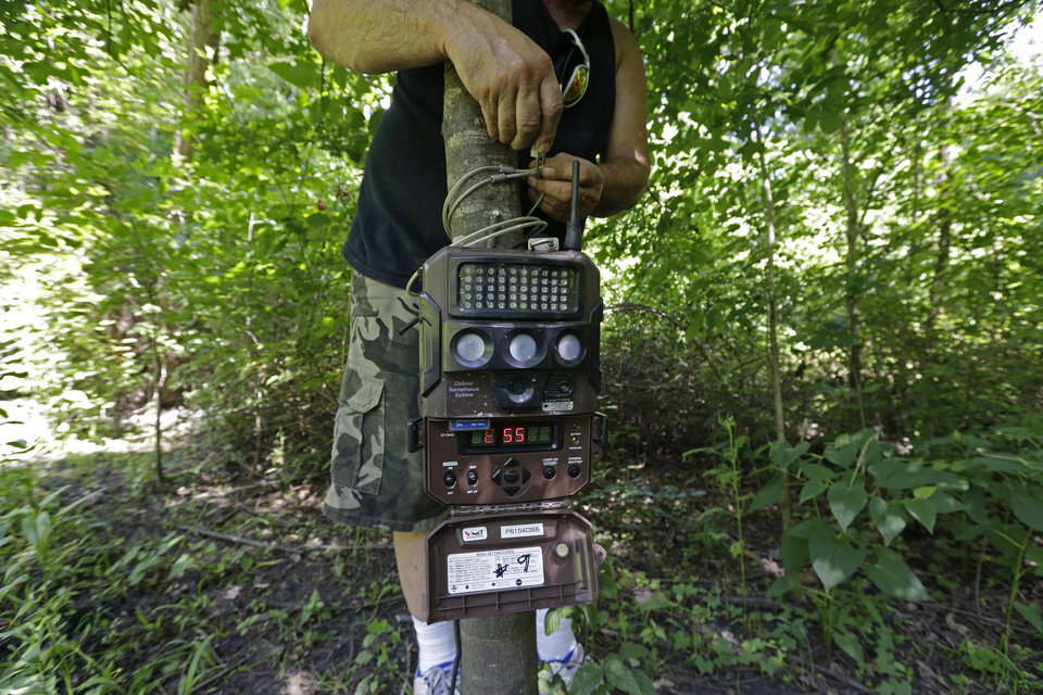 Photo - John Schmidt, a wildlife trapper, sets a trail camera to record the presence of feral hogs near one of his traps in New Orleans, Tuesday, June 17, 2014. An estimated 5 million swine, descendants of both escaped domestic pigs and wild Eurasian boars imported by hunters, do about $800 million in damage a year to farms nationwide. Damage outside farms and population control bring the annual total to $1.5 billion. A preservative used to cure bacon is being tested as poison for feral hogs.  Scientists with U.S. Department of Agriculture say sodium nitrite may be the best chance for controlling the big, prolific animals, which cost the U.S. about $1.5 billion a year_ including $800 million in farm damage.  (AP Photo/Gerald Herbert)