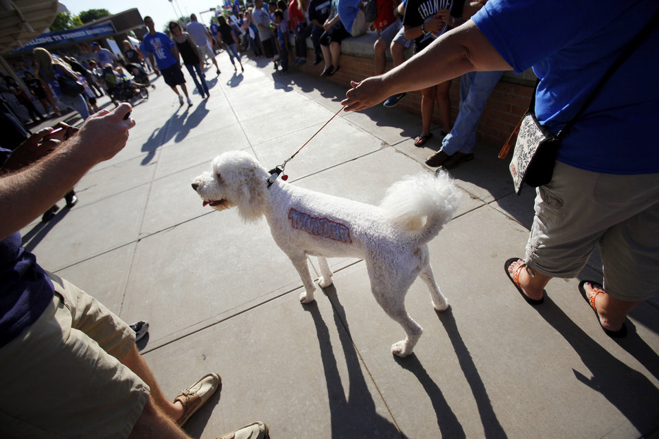 Angela Williams' Labradoodle, Ofi, stops to have a photo taken by a fan in Thunder Alley before Game 1 of the NBA Finals between the Oklahoma City Thunder and the Miami Heat at Chesapeake Energy Arena in Oklahoma City, Tuesday, June 12, 2012. Photo by Nate Billings, The Oklahoman