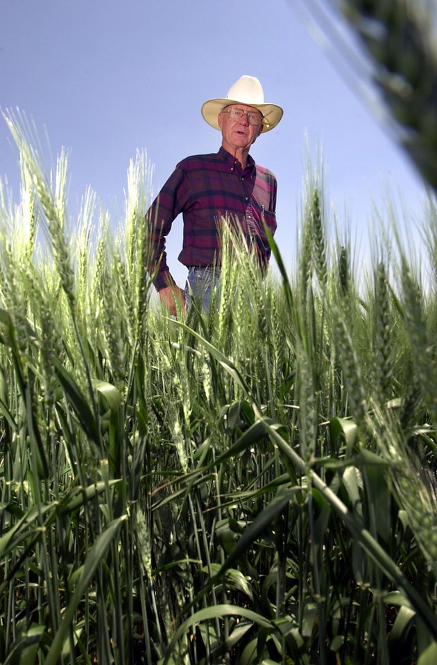 Photo - Farmer Bart Brorsen examines his crop of wheat North of Perry. Staff photo by David McDaniel