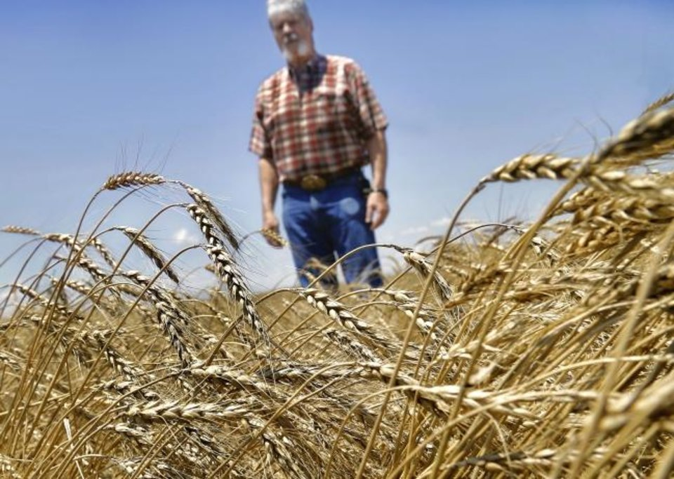 Photo -  Third-generation wheat farmer David VonTungeln stands in a field of wheat on his operation near Calumet, hoping the rain-saturated soil will dry soon. [JIM BECKEL/THE OKLAHOMAN]