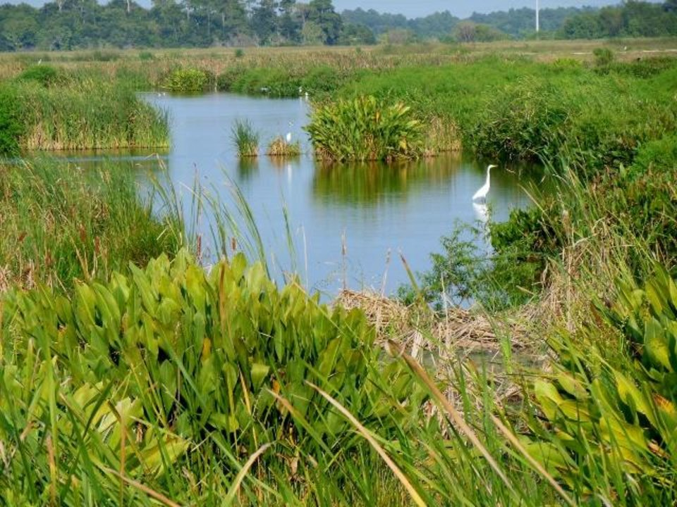 Photo -  Cattail Marsh, run by the city of Beaumont, is a great place for hiking and biking. The area is full of water birds and alligators of all sizes.    -  Photo Provided by the Beaumont Convention and Visitors Bureau