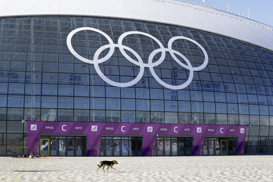 Photo - A stray dog walks outside the Ice Dome venue as preparations take place for the 2014 Winter Olympics Monday, Feb. 3, 2014, in Sochi, Russia. A pest control company which has been killing stray dogs in Sochi for years told The Associated Press on Monday that it has a contract to exterminate more of the animals throughout the Olympics. (AP Photo/Patrick Semansky)