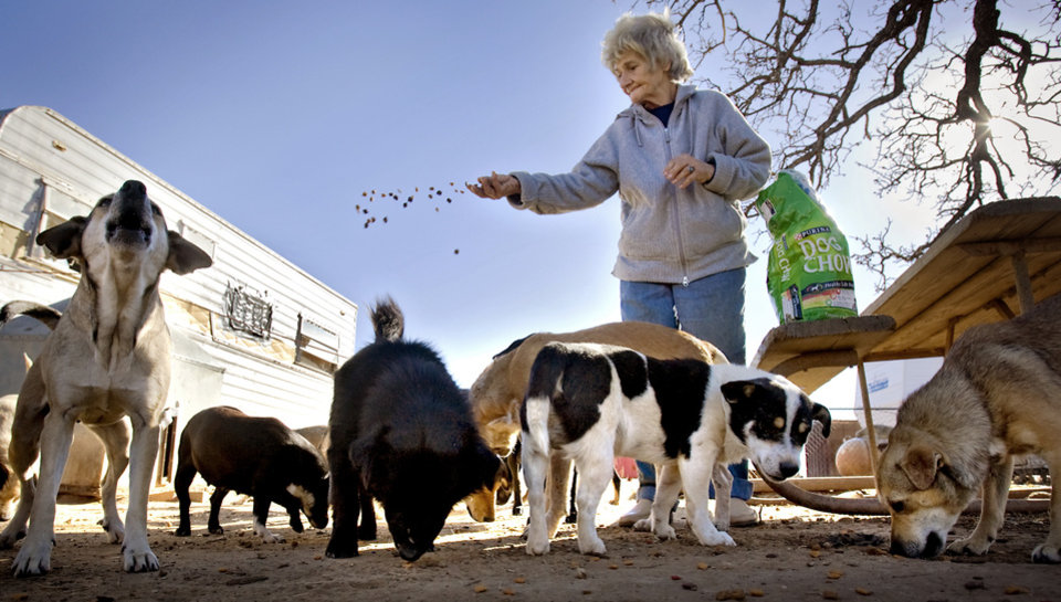 Photo - Catherine Titus feeds some of the 100 plus dogs she cares for on Tuesday, Dec. 30, 2008, in Wilson, Okla. Titus who lives out of a broken down van with no running water or electricity spends most all of her monthly $700 Social Security check to care for the dogs she calls her best friends. Titus makes sure the dogs are fed twice a day, and are also given dog treats as a little something extra.  Photo by CHRIS LANDSBERGER, THE OKLAHOMAN ORG XMIT: KOD