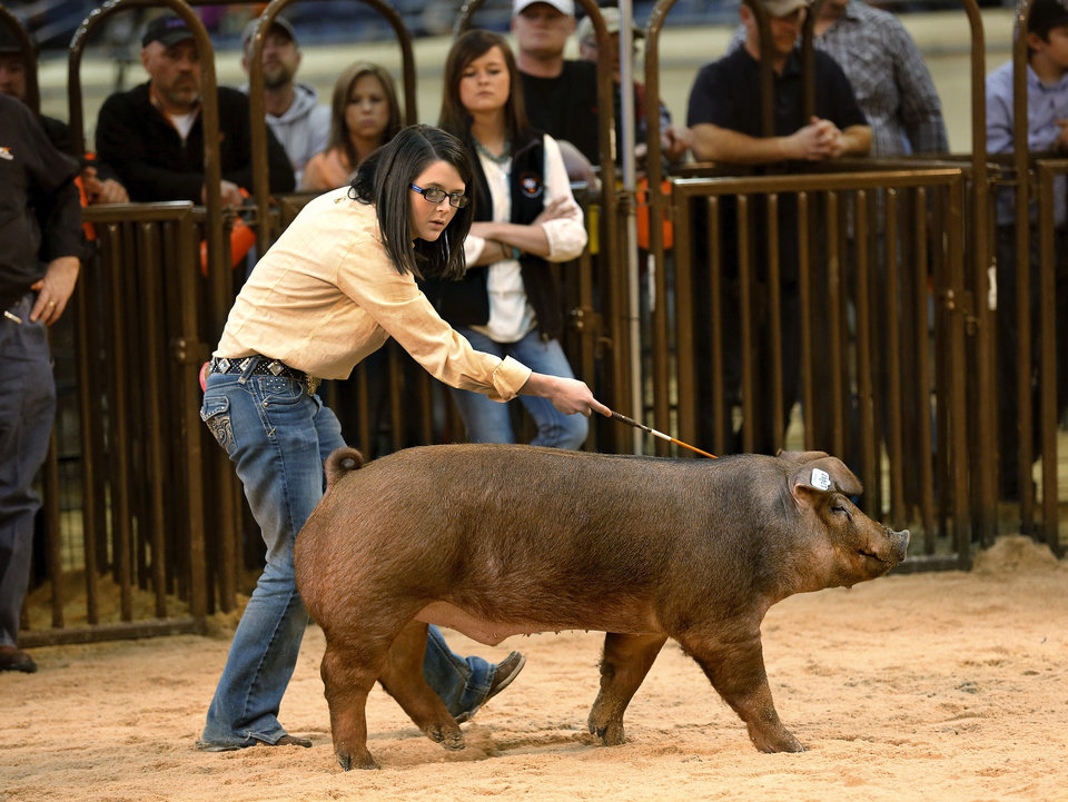 Photo -  Emily Wilkinson watches the judge Tuesday as she directs her hog, Big Red, while she and other entrants compete at the Oklahoma Youth Expo at State Fair Park. Wilkinson is with the Cement FFA. Photo by Jim Beckel, The Oklahoman   Jim Beckel -