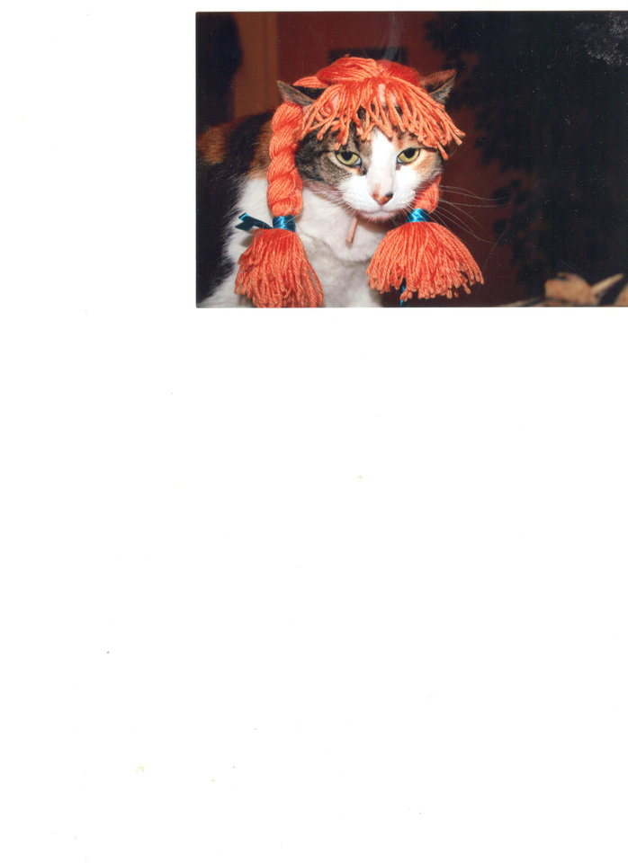 This is Suzie Conley posing in her Halloween costume!  She is the cat daughter of Sharon Conley of Choctaw, Oklahoma.  She is a very sassy lady!  Happy Halloween everyone!<br/><b>Community Photo By:</b> Sharon Conley<br/><b>Submitted By:</b> Tracy, Choctaw