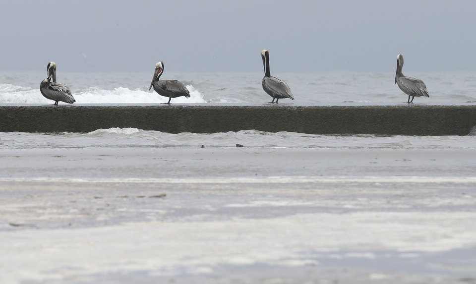 Photo - Oil sludge floats on the surface of the water as pelicans sit along the jetty nearby on East Beach in Galveston, Texas, Monday, March 24, 2014. Thousands of gallons of tar-like oil spilled into the major U.S. shipping channel after a barge ran into a ship Saturday. (AP Photo/Pat Sullivan)