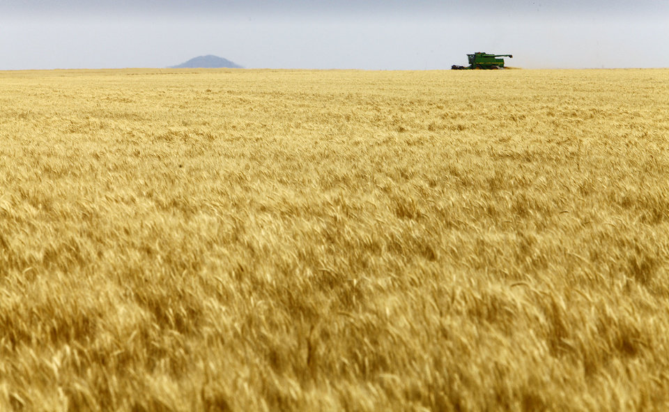 Josh Gammill harvests wheat in a field near Faxon.  <strong>David McDaniel - The Oklahoman</strong>