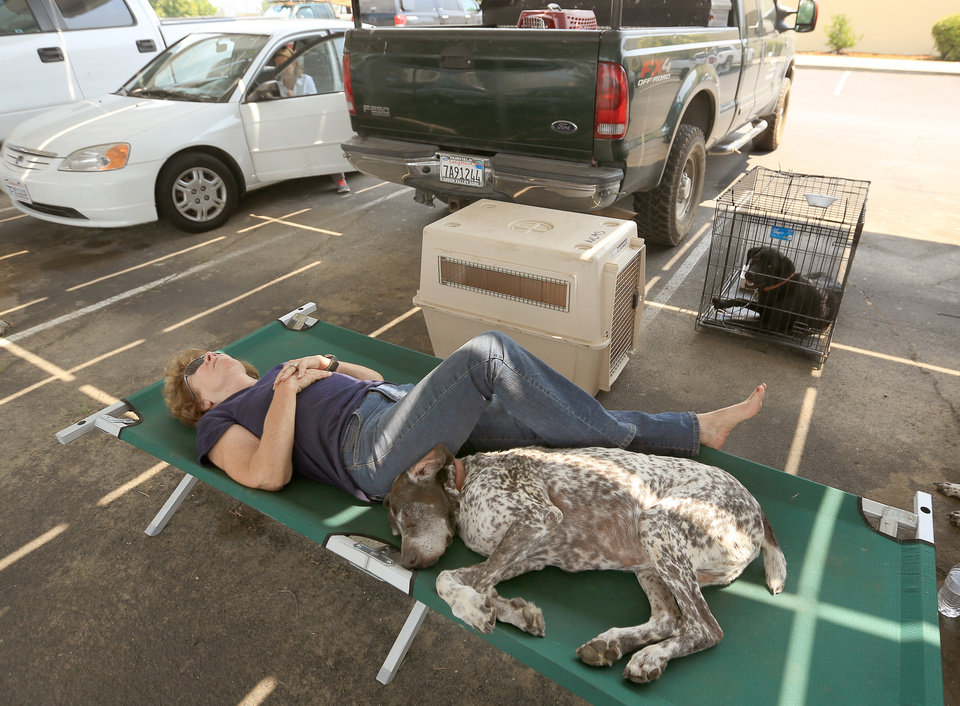 Photo - Cheryl Brown, who was evacuated from her home that was in the path of the Butts Fire, rests on a cot at Middletown High School in Middletown Calif., with her dogs Dutch, front, and Buster, in kennel, Wednesday, July 2, 2014. (AP Photo/The Press Democrat, Kent Porter)