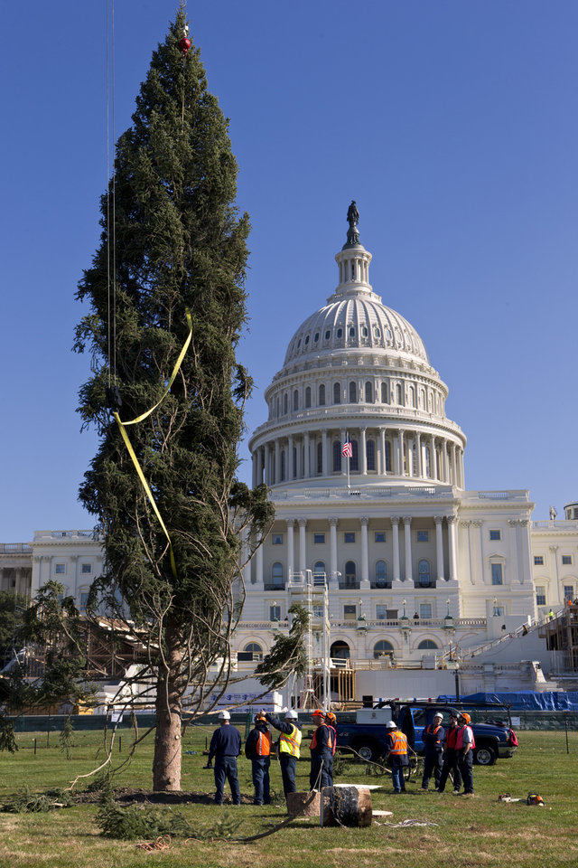 Workers erect the 2012 Capitol Christmas Tree, a 73-foot Engelmann Spruce from the White River National Forest, near Meeker, Colo., Monday, Nov. 26, 2012, on Capitol Hill in Washington. The 74-year-old tree will decorated with more than 5,000 handmade ornaments and will be illuminated on Dec. 4, 2012. (AP Photo/J. Scott Applewhite)
