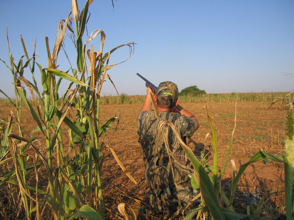 Photo -  DOVE HUNTING / HUNT: Dove season opens Monday statewide, and most hunters in central and western Oklahoma should be successful. The dove population has increased from last year and conditions are ripe for a good season.	BY ED GODFREY, THE OKLAHOMAN	ORG XMIT: 0808301720543484