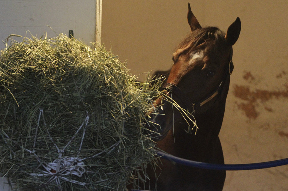 Photo - Kentucky Derby entrant Alpha eats hay in his stall before the 138th Kentucky Derby horse race at Churchill Downs Saturday, May 5, 2012, in Louisville, Ky. (AP Photo/Garry Jones)  ORG XMIT: DBY104