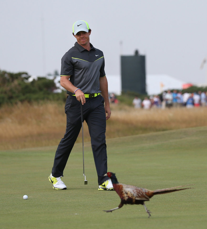 Photo - Rory McIlroy of Northern Ireland pauses play and watches a pheasant crossing the 8th green during the second day of the British Open Golf championship at the Royal Liverpool golf club, Hoylake, England, Friday July 18, 2014. (AP Photo/Scott Heppell)