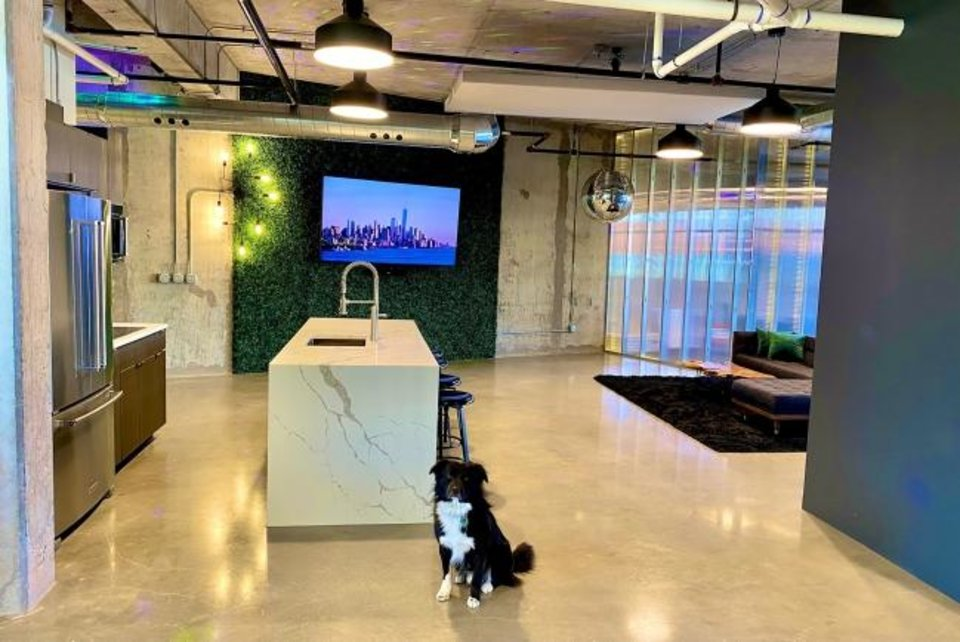 Photo -  Barney, Zach Martin's rescued companion, on daytime patrol at Adept Commercial Real Estate. [PROVIDED/ADEPT]