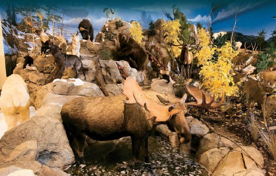 Photo -  Wildlife displays are included in each Cabela's store.