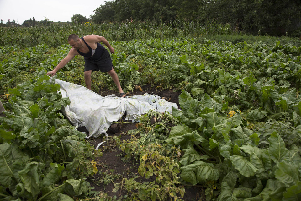 Photo - A man covers a body with a  plastic sheet near the site of a crashed Malaysia Airlines passenger plane near the village of Rozsypne, Ukraine, eastern Ukraine Friday, July 18, 2014. Rescue workers, policemen and even off-duty coal miners were combing a sprawling area in eastern Ukraine near the Russian border where the Malaysian plane ended up in burning pieces Thursday, killing all 298 aboard. (AP Photo/Dmitry Lovetsky)