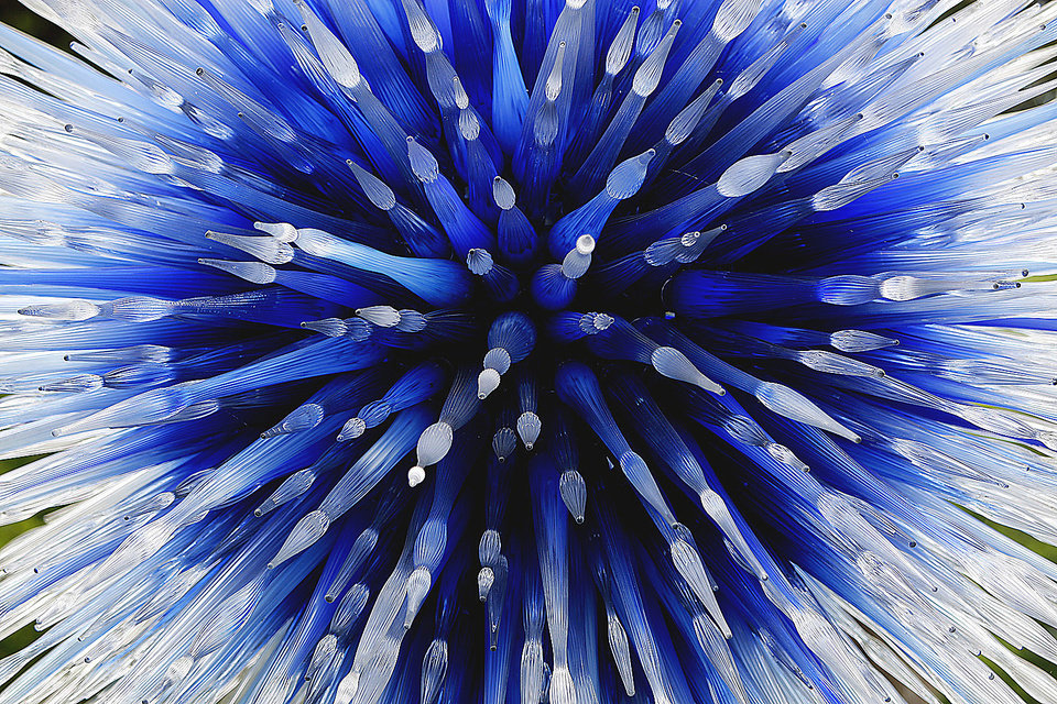 "A close-up view is shown of ""The Dallas Star"" by Dale Chihuly."