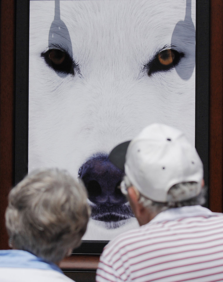"A couple look at a print by artist Randal Napier titled ""Arctic Eyes"" during opening day of the Festival of the Arts in downtown Oklahoma City TUesday, April 24, 2012. Photo by Doug Hoke, The Oklahoman"