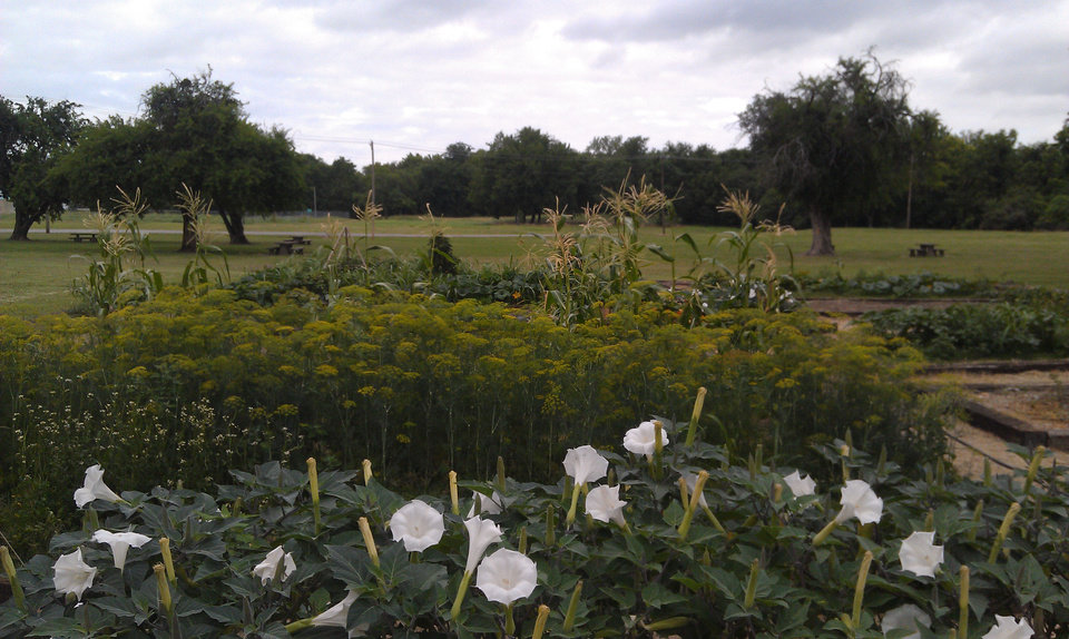 Photo - Crops and flowers grow at the new Arbuckle Heritage Garden at the Fort Gibson Historic Site in eastern Oklahoma. PHOTO PROVIDED.